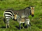 Mountain-Zebra-National-Park